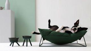 电子商家Pets So Good推出创新宠物产品 迎接节日季到来