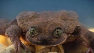 """""""世界最孤独""""青蛙有望脱单 而有些物种,灭绝了"""