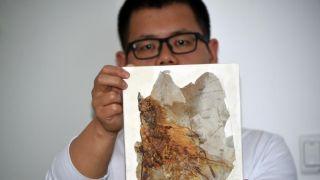 中国发现1.6亿年前侏罗纪具膜质翅膀恐龙