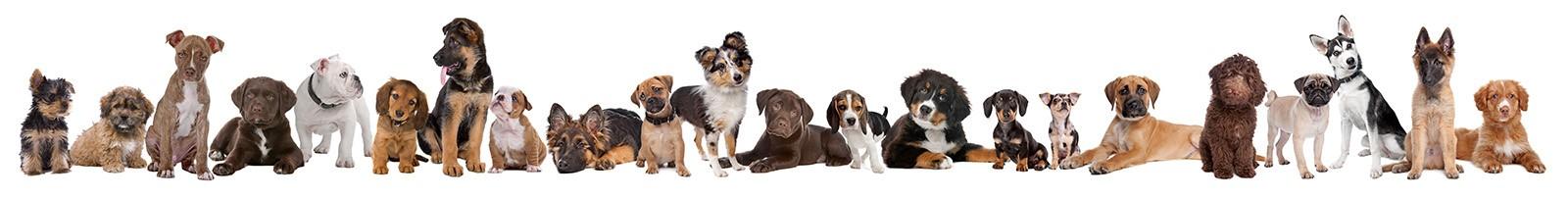 春夏季节狗狗最容易得哪些???_图1-12