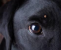 春夏季节狗狗最容易得哪些???_图1-3