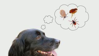春夏季节狗狗最容易得哪些病?
