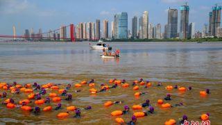 湖北武汉渡江节 2500余人横渡长江