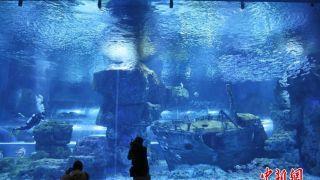 世界海拔最高综合性大型海洋馆即将迎客