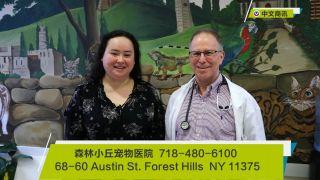 【视频】森林小丘宠物医院全方位治疗各类疾病