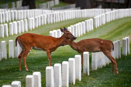 """华盛顿特区拟提前分段重启 """"居家令""""期间公墓成动物乐土(多图)"""