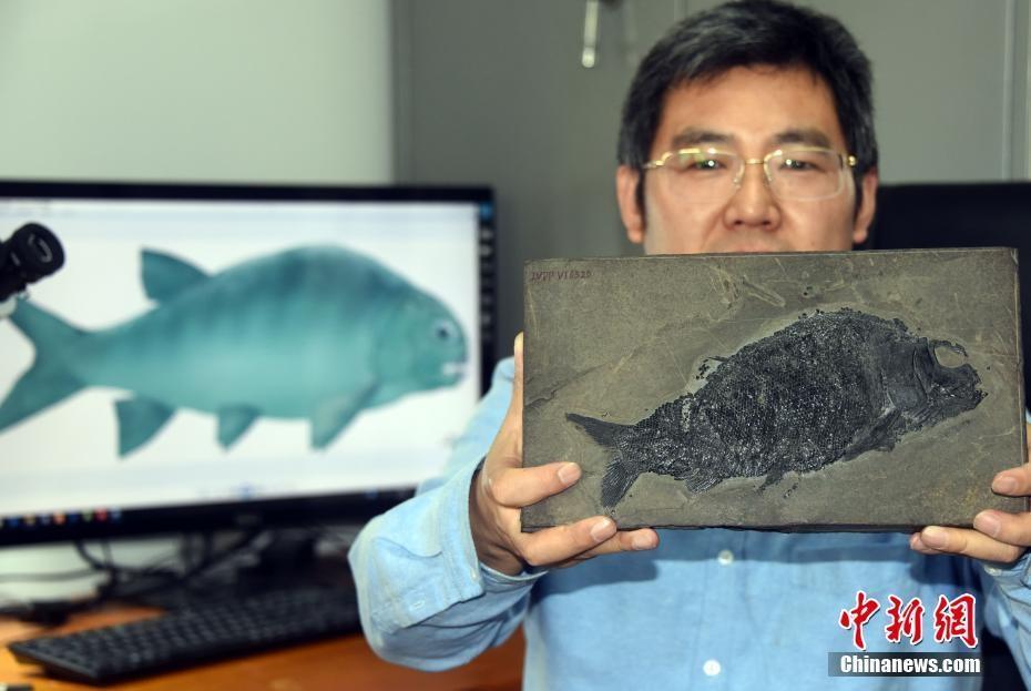 """中国科学家研究新发现2.44亿年前""""盘州暴鱼""""_图1-1"""
