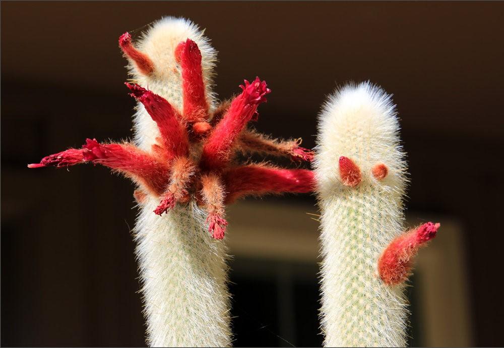 仙人掌类的花朵