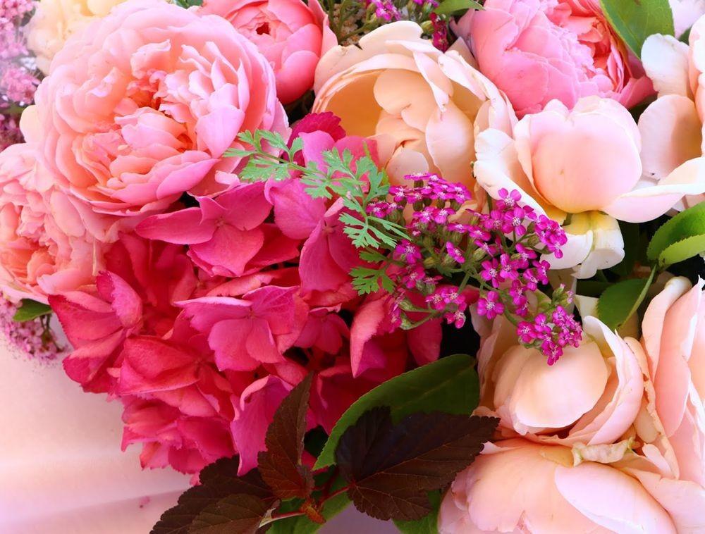 花卉日记之--14