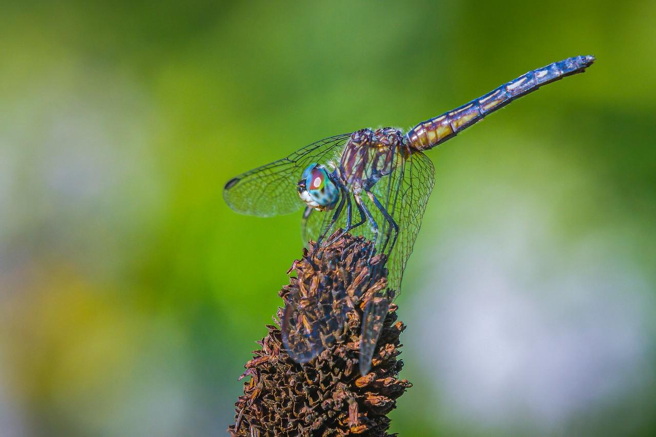 小蜻蜓,我的舞台