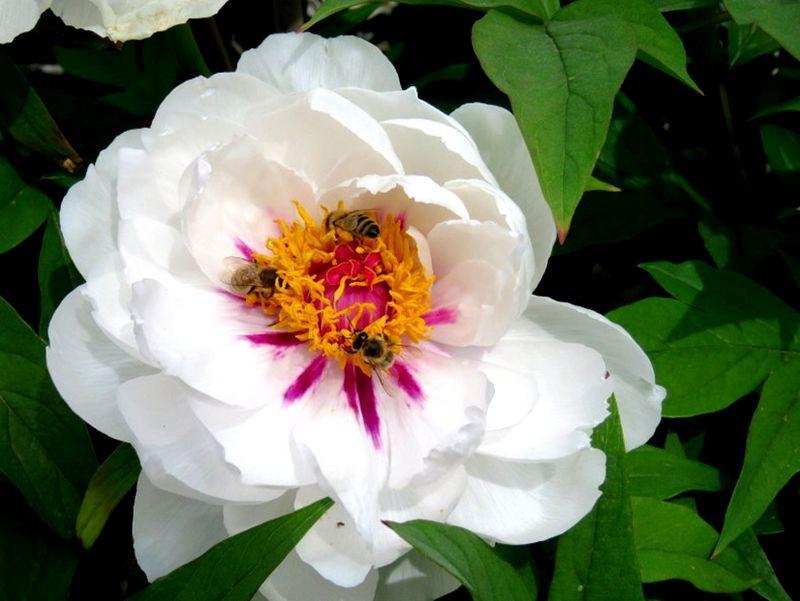花卉日记-59