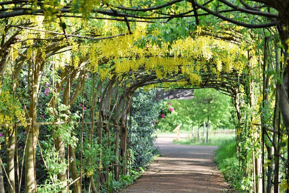 伦敦里土满公园的花花草草