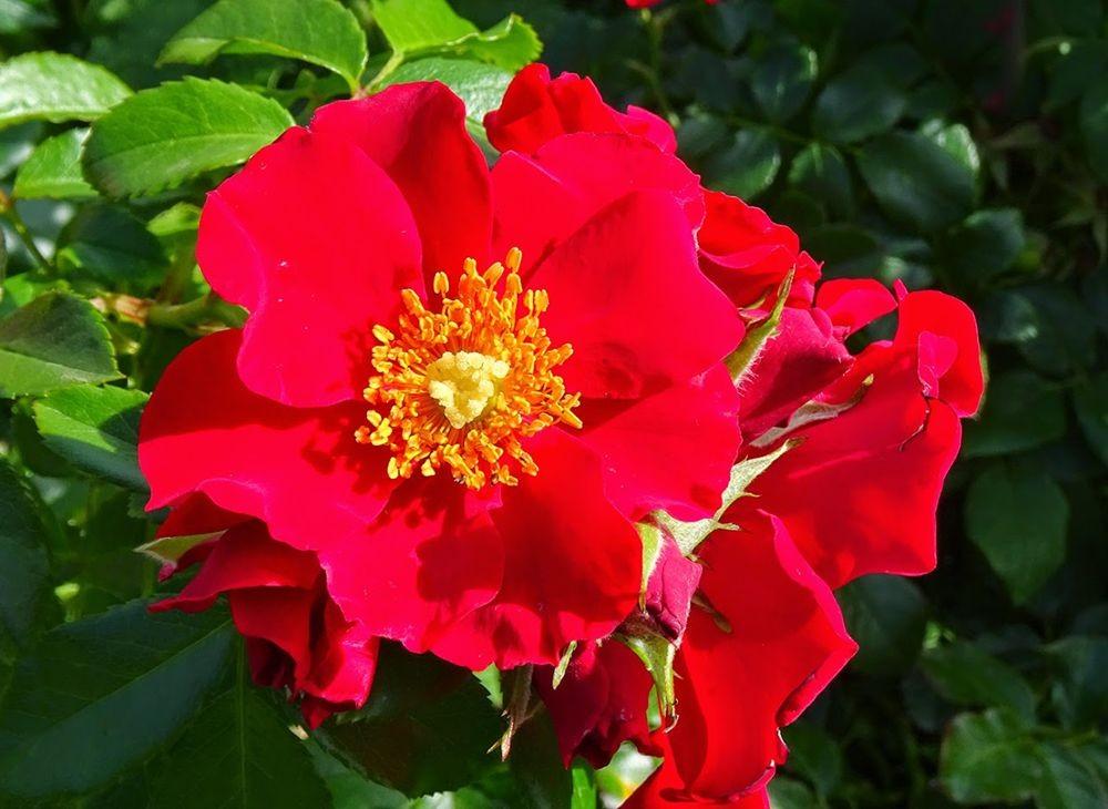 花卉日记-76