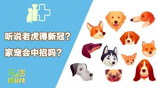 宠物会感染新冠病毒吗?宠物防疫知识你要了解这些