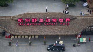 """""""瞒豹""""19天 杭州野生动物世界赚了约¥5000万?"""