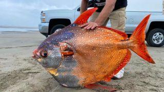 俄勒冈州海滩惊现罕见深海鱼 重达100磅